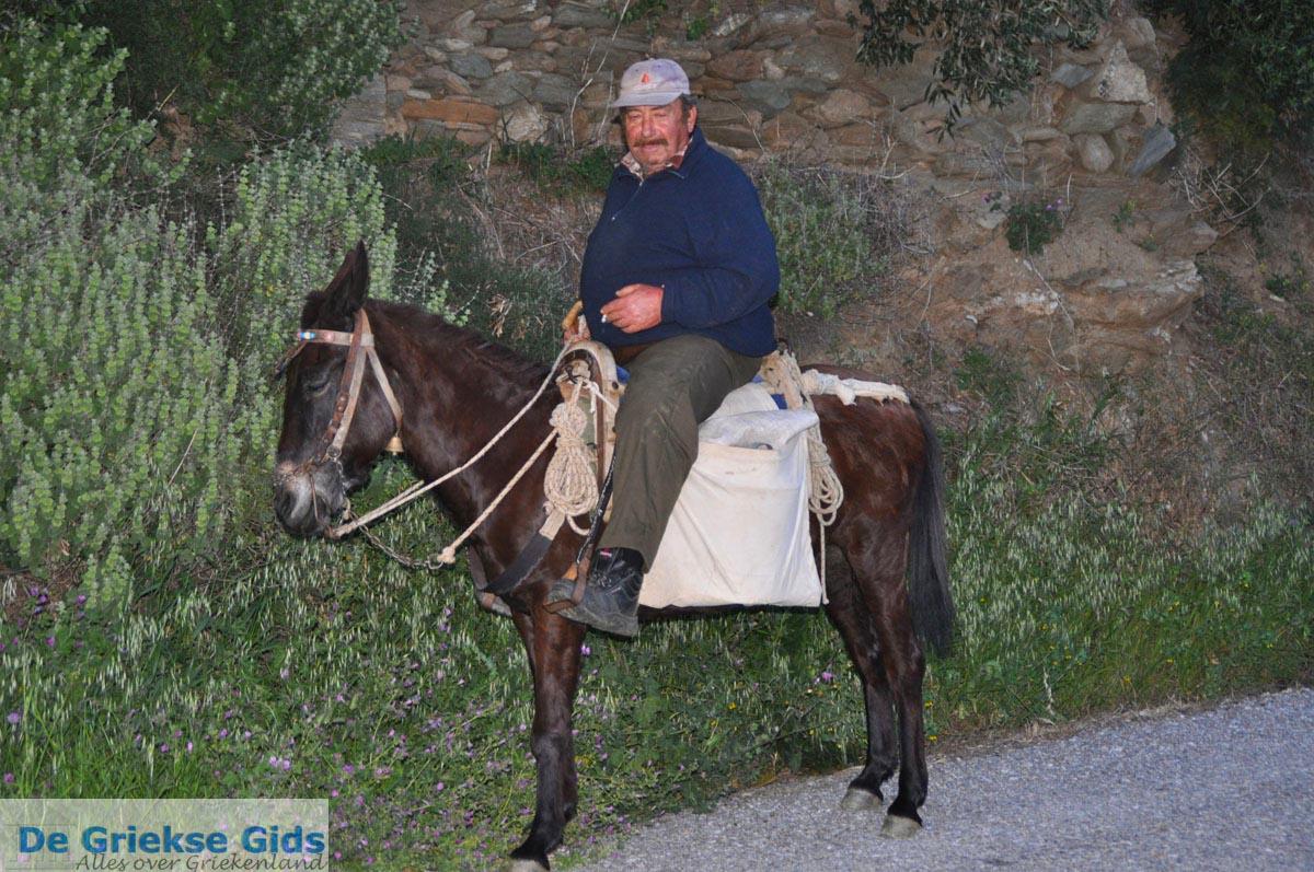 foto Man op paardje bij Batsi | Eiland Andros | De Griekse Gids | Foto 4