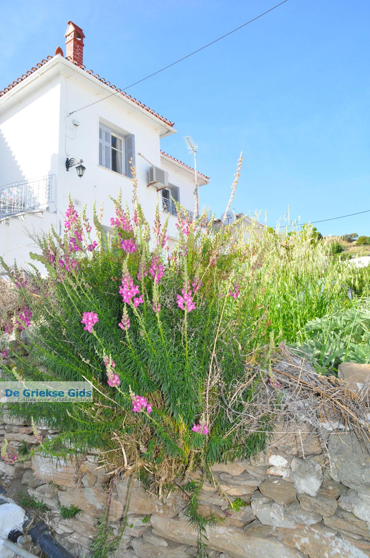 foto Stenies | Eiland Andros | De Griekse Gids foto 11