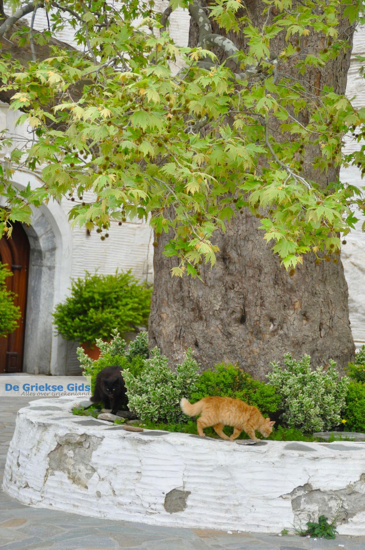 foto Panachrantou Klooster | Eiland Andros | De Griekse Gids | Foto 15