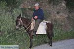 GriechenlandWeb.de Man auf paardje Batsi | Insel Andros | GriechenlandWeb.de | Foto 4 - Foto GriechenlandWeb.de