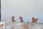 Stenies | Eiland Andros | De Griekse Gids foto 3 - Foto van De Griekse Gids