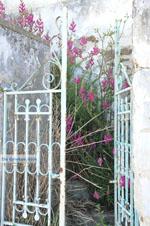 Stenies | Eiland Andros | De Griekse Gids foto 5 - Foto van De Griekse Gids
