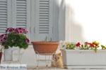 Stenies | Eiland Andros | De Griekse Gids foto 9 - Foto van De Griekse Gids