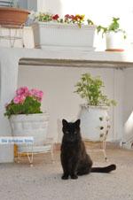 Stenies | Eiland Andros | De Griekse Gids foto 10 - Foto van De Griekse Gids