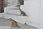 Stenies | Eiland Andros | De Griekse Gids foto 12 - Foto van De Griekse Gids