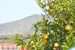 Stenies | Eiland Andros | De Griekse Gids foto 15 - Foto van De Griekse Gids