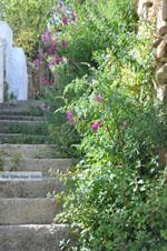 Stenies | Eiland Andros | De Griekse Gids foto 20 - Foto van De Griekse Gids