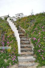 Batsi | Eiland Andros | De Griekse Gids | Foto 6 - Foto van De Griekse Gids
