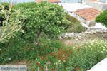 Batsi | Eiland Andros | De Griekse Gids | Foto 15 - Foto van De Griekse Gids