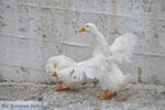 Batsi | Eiland Andros | De Griekse Gids | Foto 22 - Foto van De Griekse Gids