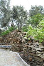 Batsi | Eiland Andros | De Griekse Gids | Foto 38 - Foto van De Griekse Gids