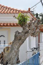 Batsi | Eiland Andros | De Griekse Gids | Foto 46 - Foto van De Griekse Gids
