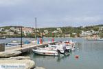 GriechenlandWeb.de Batsi | Insel Andros | GriechenlandWeb.de | Foto 59 - Foto GriechenlandWeb.de
