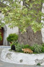 Panachrantou Klooster | Eiland Andros | De Griekse Gids | Foto 15 - Foto van De Griekse Gids