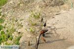 Panachrantou Klooster | Eiland Andros | De Griekse Gids | Foto 59 - Foto van De Griekse Gids