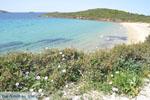 Strand Kypri (Golden Beach) bij Batsi | Eiland Andros | De Griekse Gids foto 004 - Foto van De Griekse Gids