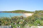 Strand Kypri (Golden Beach) bij Batsi | Eiland Andros | De Griekse Gids foto 005 - Foto van De Griekse Gids