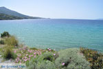 Strand Kypri (Golden Beach) bij Batsi | Eiland Andros | De Griekse Gids foto 007 - Foto van De Griekse Gids