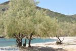 Strand Fellos bij Gavrio | Eiland Andros | De Griekse Gids | Foto 11 - Foto van De Griekse Gids