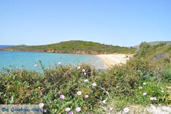 Strand Kypri (Golden Beach) Batsi | Insel Andros | GriechenlandWeb.de foto 005 - Foto von GriechenlandWeb.de