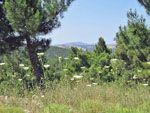 Natuur bij Avgonima | Chios - De Griekse Gids - Foto van Doortje van Lieshout