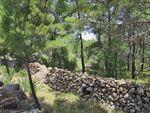 Avgonima bossen | Chios - De Griekse Gids - Foto van Doortje van Lieshout