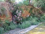 Kambos bebloemde muur | Chios - De Griekse Gids - Foto van Doortje van Lieshout