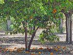 Herenhuis Kambos bij Thymiana | Chios - De Griekse Gids - Foto van Doortje van Lieshout