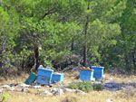 Bijnekorven in het Noorden van Chios - De Griekse Gids - Foto van Doortje van Lieshout