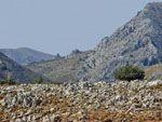 Geiten in Spartounda | Noord Chios - De Griekse Gids - Foto van Doortje van Lieshout