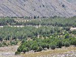 Overal rotsen, in het midden een bos - Eiland Chios - Foto van De Griekse Gids