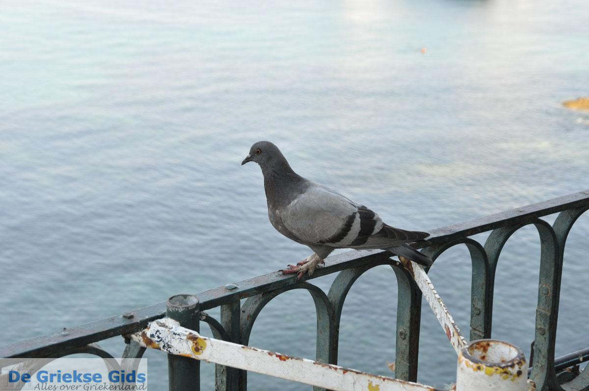 foto Corfu stad | Corfu | De Griekse Gids - foto 125