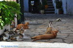 Benitses | Corfu | De Griekse Gids - foto 17 - Foto van De Griekse Gids