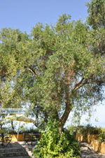 Pelekas Keizers' troon | Corfu | De Griekse Gids - foto 17 - Foto van De Griekse Gids