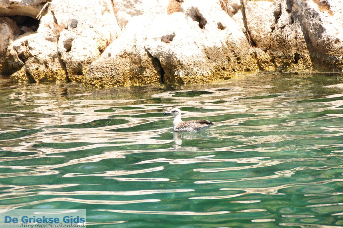 foto Gaios | Eiland Paxos (Paxi) bij Corfu | De Griekse Gids | Foto 010