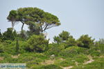 Eiland Paxos (Paxi) bij Corfu | De Griekse Gids | Foto 068 - Foto van De Griekse Gids