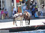 Eiland Hydra Griekenland - De Griekse Gids Foto 74 - Foto van De Griekse Gids