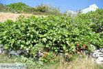 Arkasa (Arkassa) | Eiland Karpathos | De Griekse Gids 003