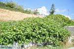 Arkasa (Arkassa) | Eiland Karpathos | De Griekse Gids 004 - Foto van De Griekse Gids