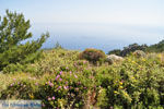 Natuur in het oosten van Karpathos | De Griekse Gids 007 - Foto van De Griekse Gids