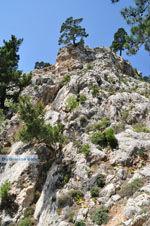 Natuur in het oosten van Karpathos   De Griekse Gids foto 010 - Foto van De Griekse Gids