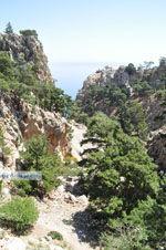 Natuur in het oosten van Karpathos | De Griekse Gids foto 011 - Foto van De Griekse Gids