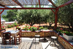 Taverna Eklekton Lefkos | Eiland Karpathos | De Griekse Gids foto 002 - Foto van De Griekse Gids