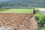 Avlonas bij Olympos | Karpathos | De Griekse Gids foto 6 - Foto van De Griekse Gids