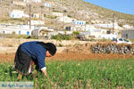 Avlonas bij Olympos | Karpathos | De Griekse Gids foto 7 - Foto van De Griekse Gids