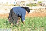 Avlonas bij Olympos | Karpathos | De Griekse Gids foto 8 - Foto van De Griekse Gids