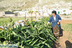 Avlonas bij Olympos | Karpathos | De Griekse Gids foto 9 - Foto van De Griekse Gids