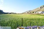 Avlonas bij Olympos | Karpathos | De Griekse Gids foto 10 - Foto van De Griekse Gids