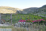 Avlonas bij Olympos | Karpathos | De Griekse Gids foto 17 - Foto van De Griekse Gids