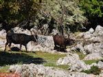 Schitterend landschap - Kefalonia - Foto 49 - Foto van De Griekse Gids